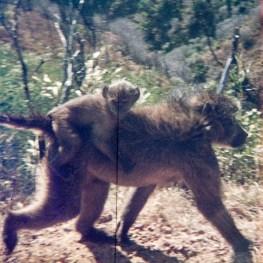 1973-suedafrika-namibia-014