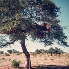 1973-suedafrika-namibia-030