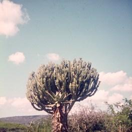 1973-suedafrika-namibia-038