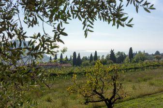 Weinstöcke und Blick auf den Gardaee in Garda im Oktober 2018