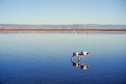 2019-chile-lagunen-009