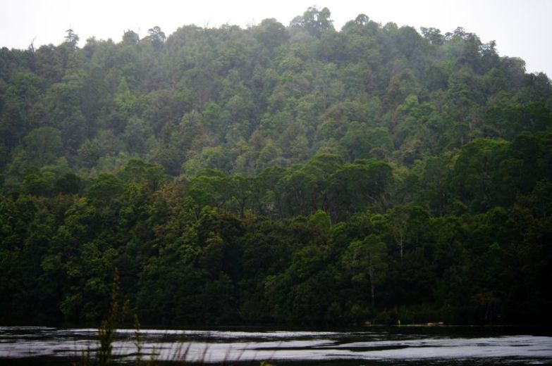 Rainforest seen from barge