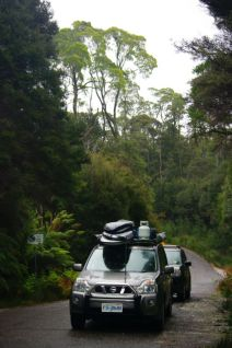 Cars in rainforest