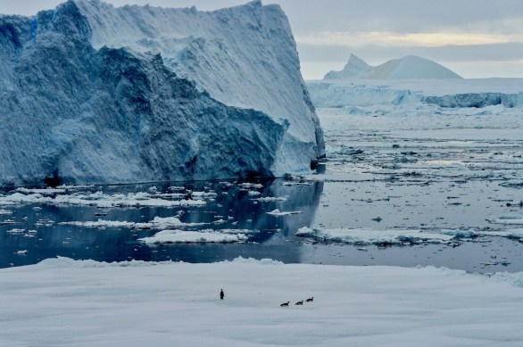 Antarctica (100 of 290)
