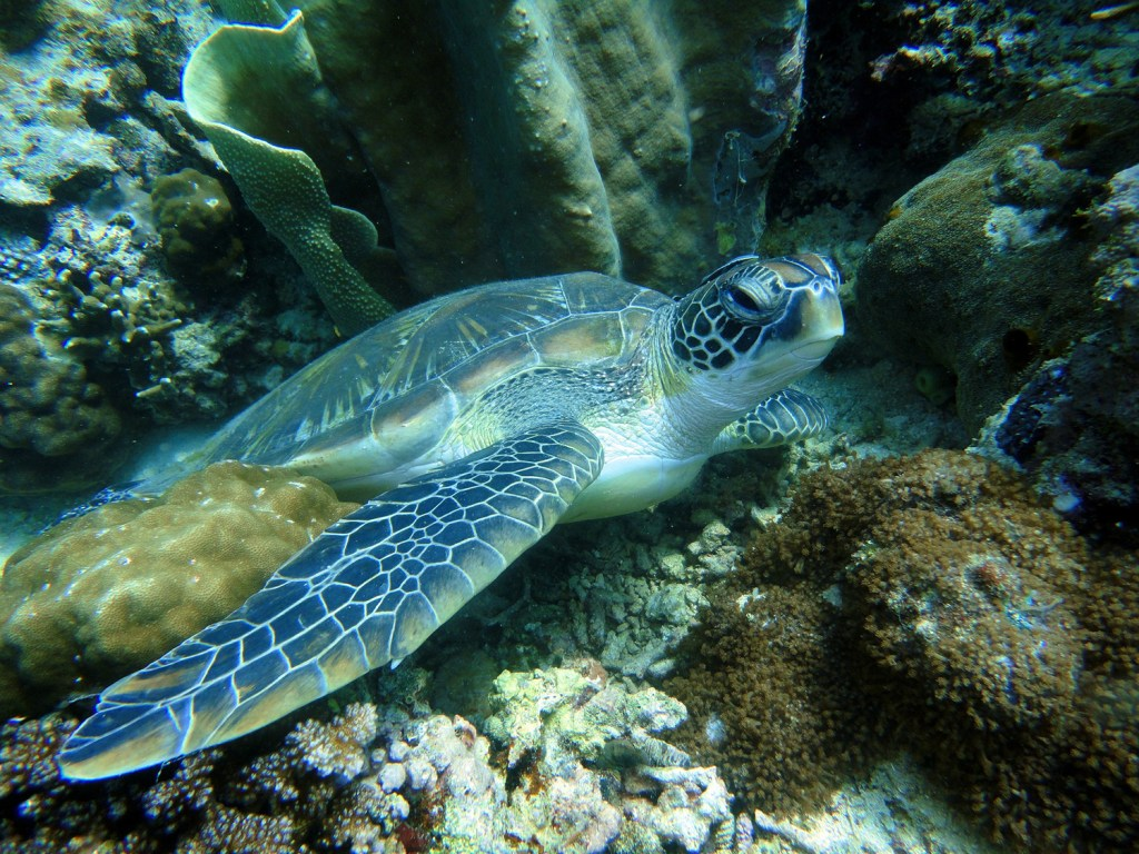 snorkla i Filippinerna