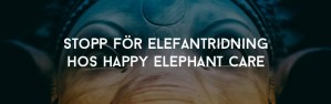 STOPP för elefantridning hos Happy Elephant Care
