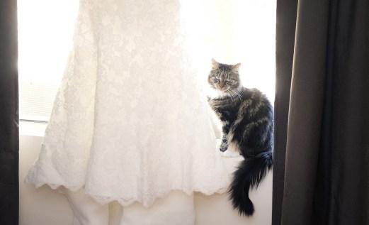 Cat with Wedding Dress