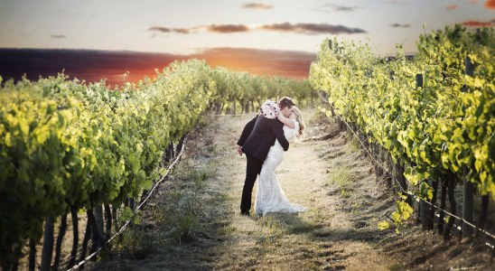 Kisses in the Coriole Vineyard