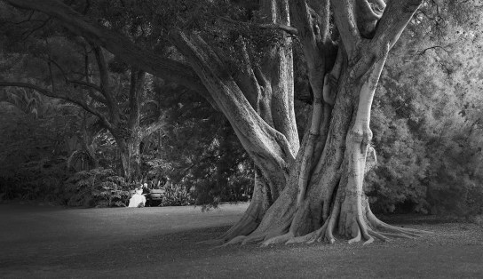 Together under a big tree