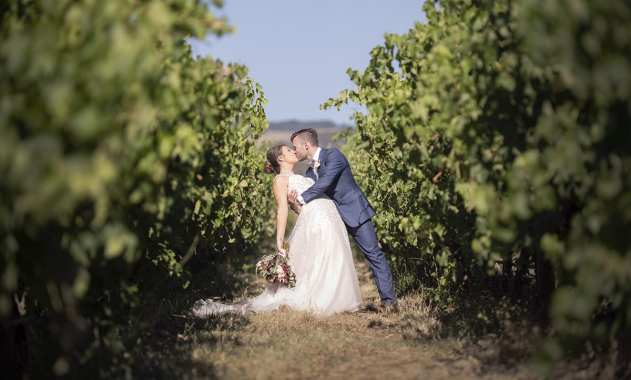 In the vineyards