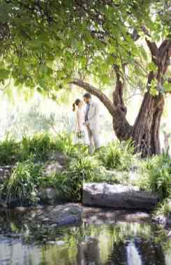 Under my favourite tree in Veal Gardens