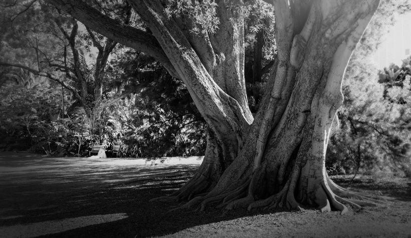 Under a tree