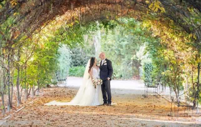 Under the wisteria