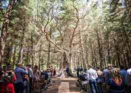 Burbrook forest wedding tree