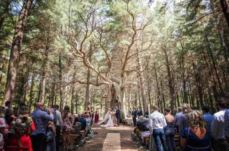 Burbrook forest wedding tree