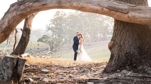 Under a fallen tree