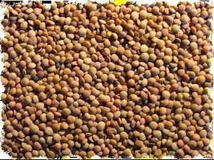 Le proprietà benefiche delle lenticchie