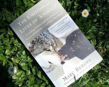 Boken The emotional lives of animals Av Marc Bekoff