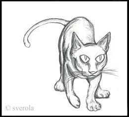 Katze - ©sverola