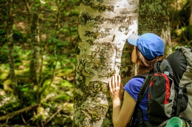 Forest bathing may have