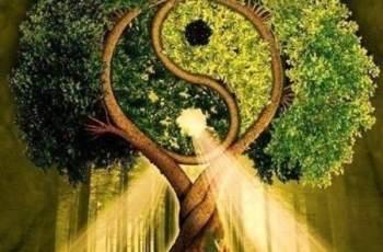 Дървото на спокойствието