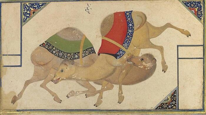 malba velbloudů