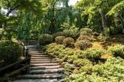 Bambusový háj Arashiyama