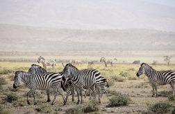 Nedaleko jezera potkáte i zebry. Plameňáci u jezera. Foto: Richard Mortel from Riyadh, Saudi Arabia, CC BY 2.0 , Wikimedia Commons
