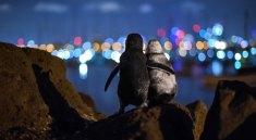 Zamilovaní tučňáci