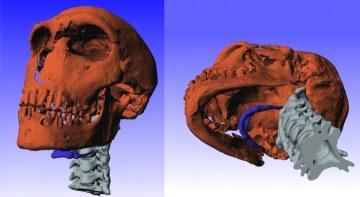 CT sken neandrtálce