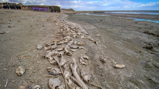 Saltonské moře