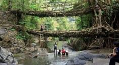 Dvojitý most ze živých kořenů