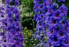 гороскоп цветов в августе