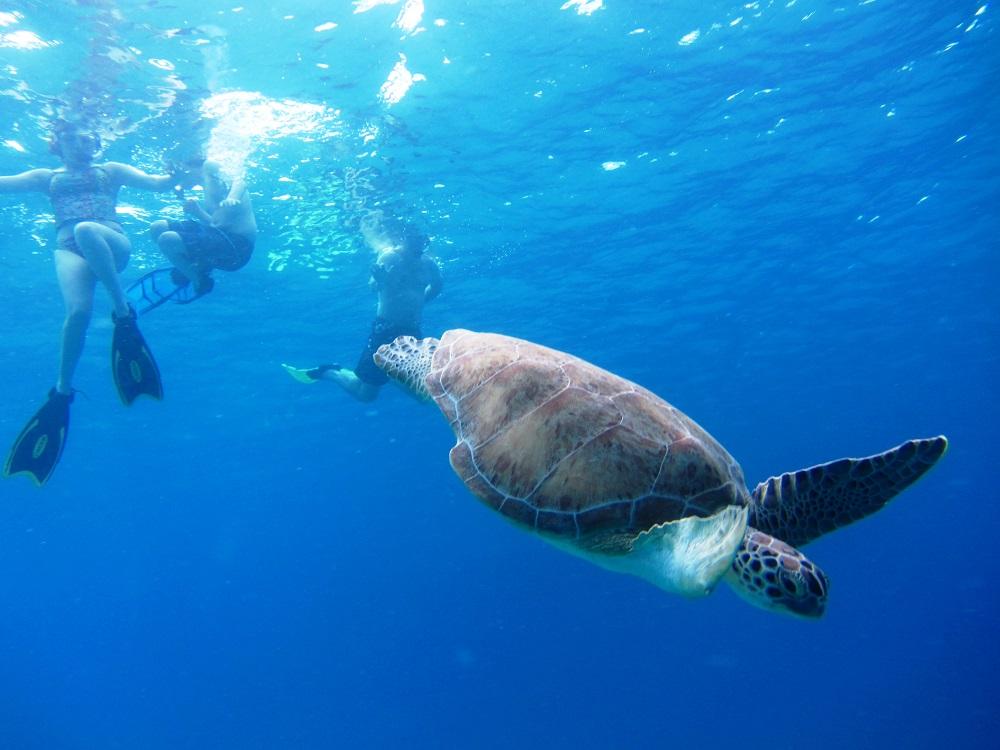 Charter-Turtle-Swimming-Away