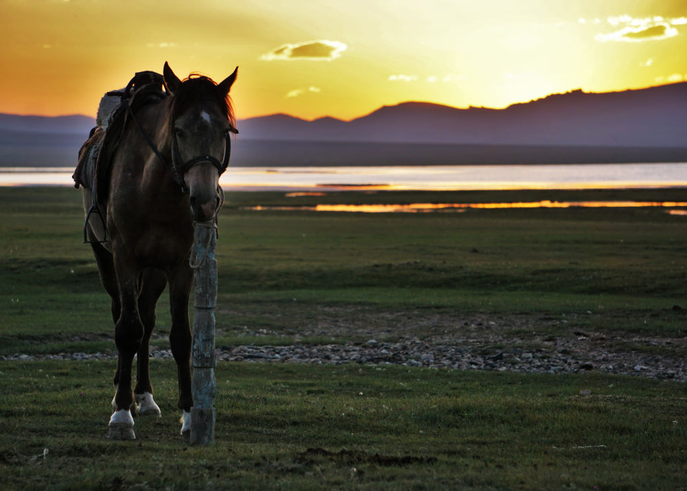 Horse at sunset in the high country