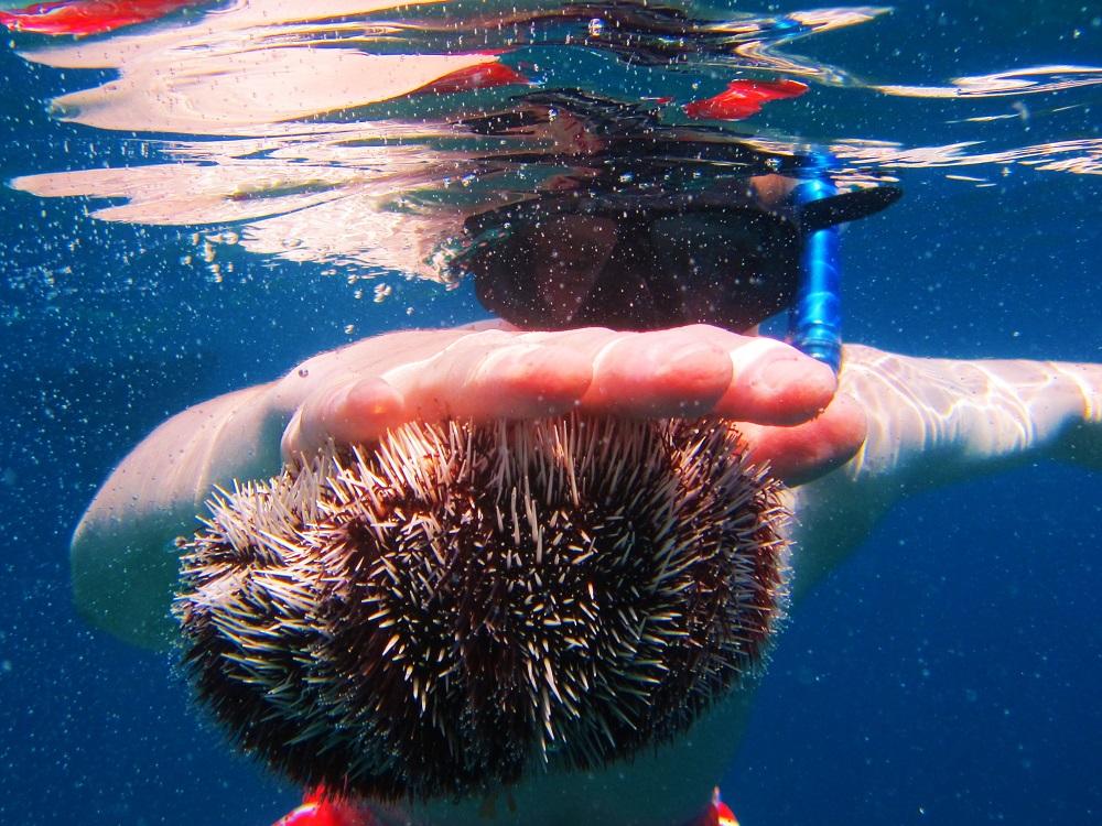 Holding an urchin