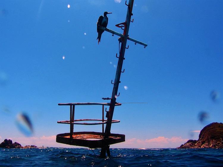 Shipwreck Mast With Bird