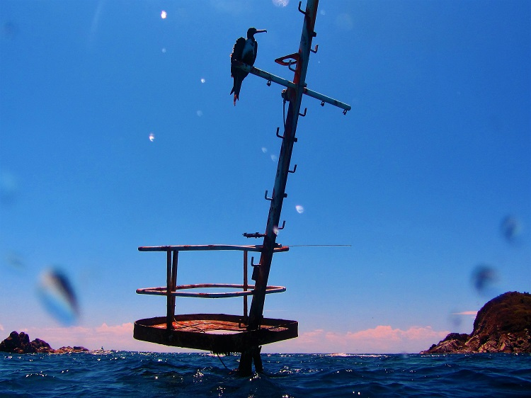 Shipwreck Mast With Bird