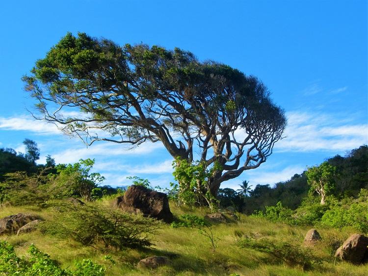 Tree on the top of Montserrat