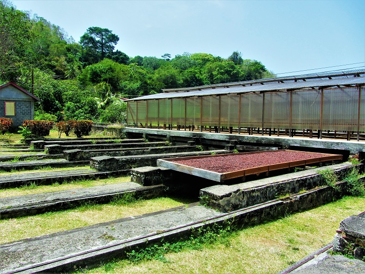 POTD - Cruising - Grenada - Belmont - Drying Chocolate