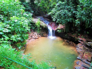 Asa Wright Nature Center - bathing pool