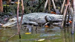 Caroni Swamp 2