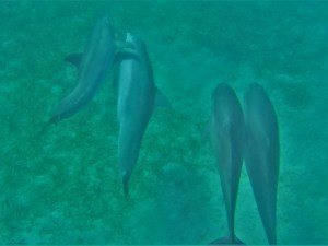 Dolphins 3