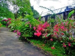 Royal Botanic Garden 1