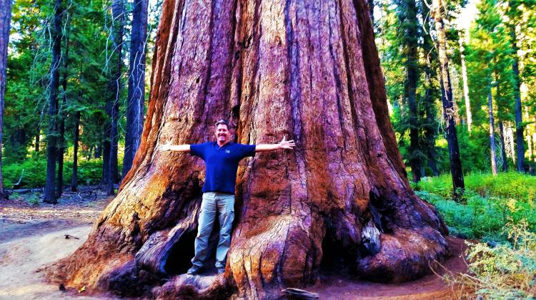 Yosemite - Mariposa Grove 1
