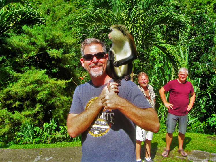 Grenada - mona Monkeys POTD