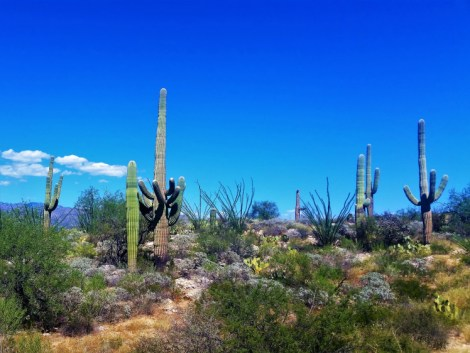 Saguaro National Park 2
