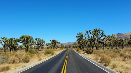 Joshua Tree National Park 2