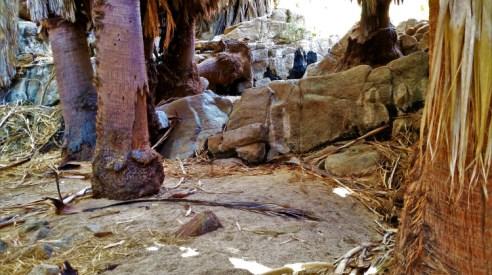 Joshua Tree National Park - Cottonwood Springs 2