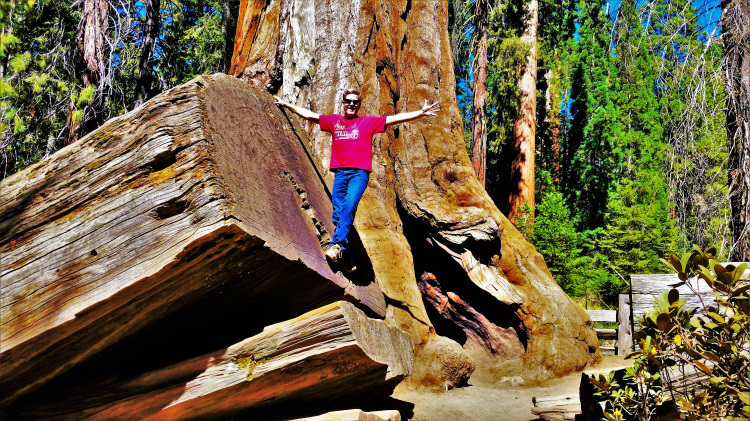 Sequoia National Park 1